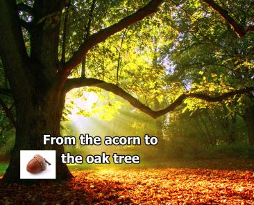 oak-tree-with-acorn